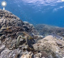 Google Sea View am Great Barrier Reef